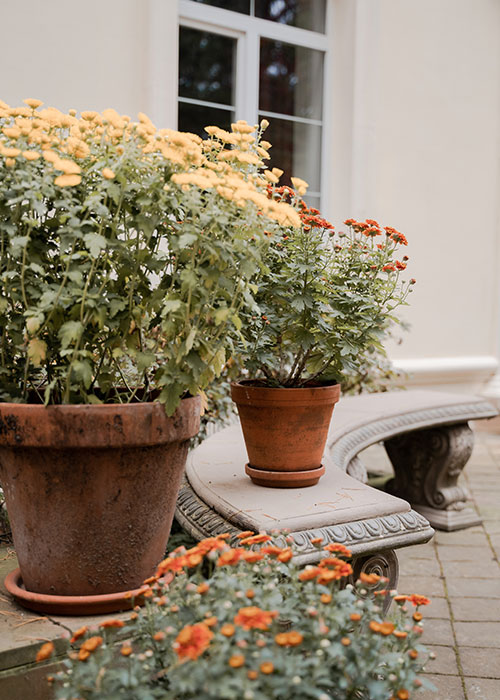 blumen-nutschnig-blumentopf-pflanze